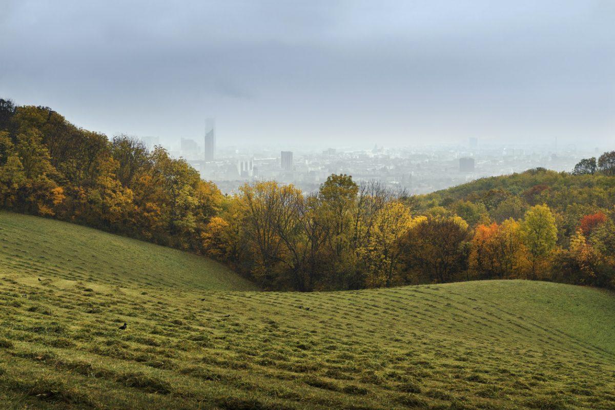 wenerwald in wenen met uitzicht over de stad