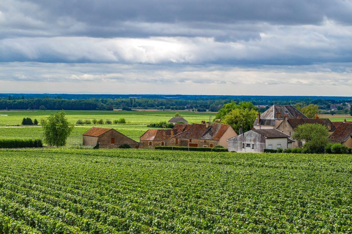 Ontdek de beste wijnen van Frankrijk