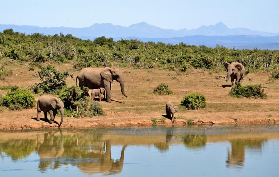 Wilde dieren spotten in Zuid Afrika