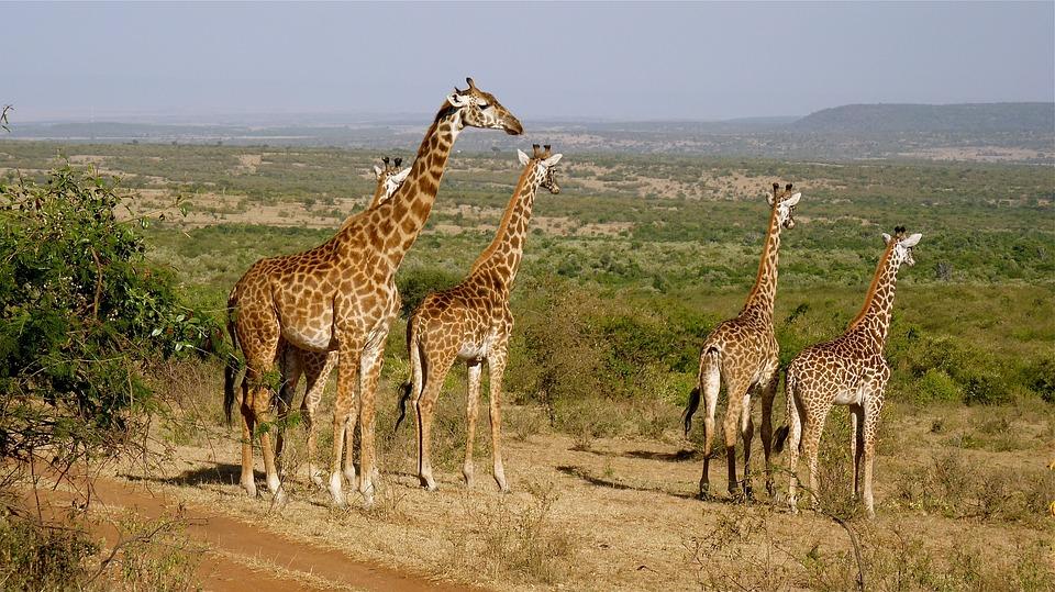 Kenia, de poort naar Afrika