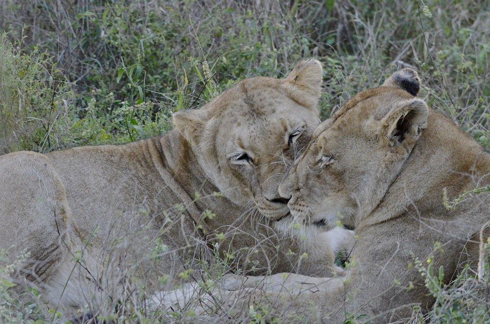 Kenia De ultieme safari