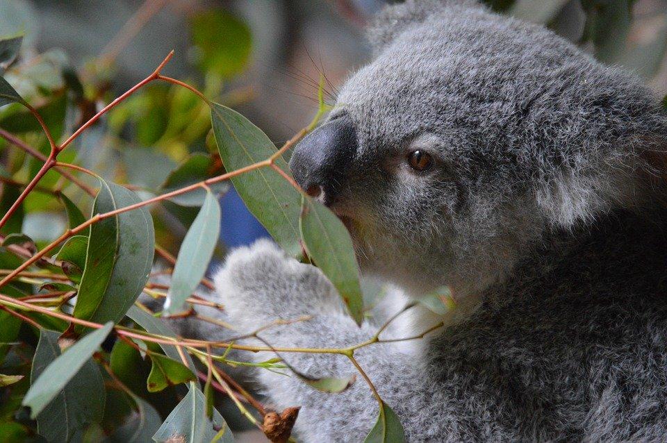 australie Australia Zoo bezienswaardigheden en tips