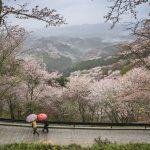 Nara stad japan bezienswaardigheden