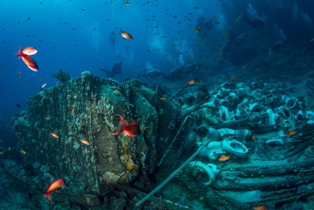 Shark en Yolanda Reef egypte duiken