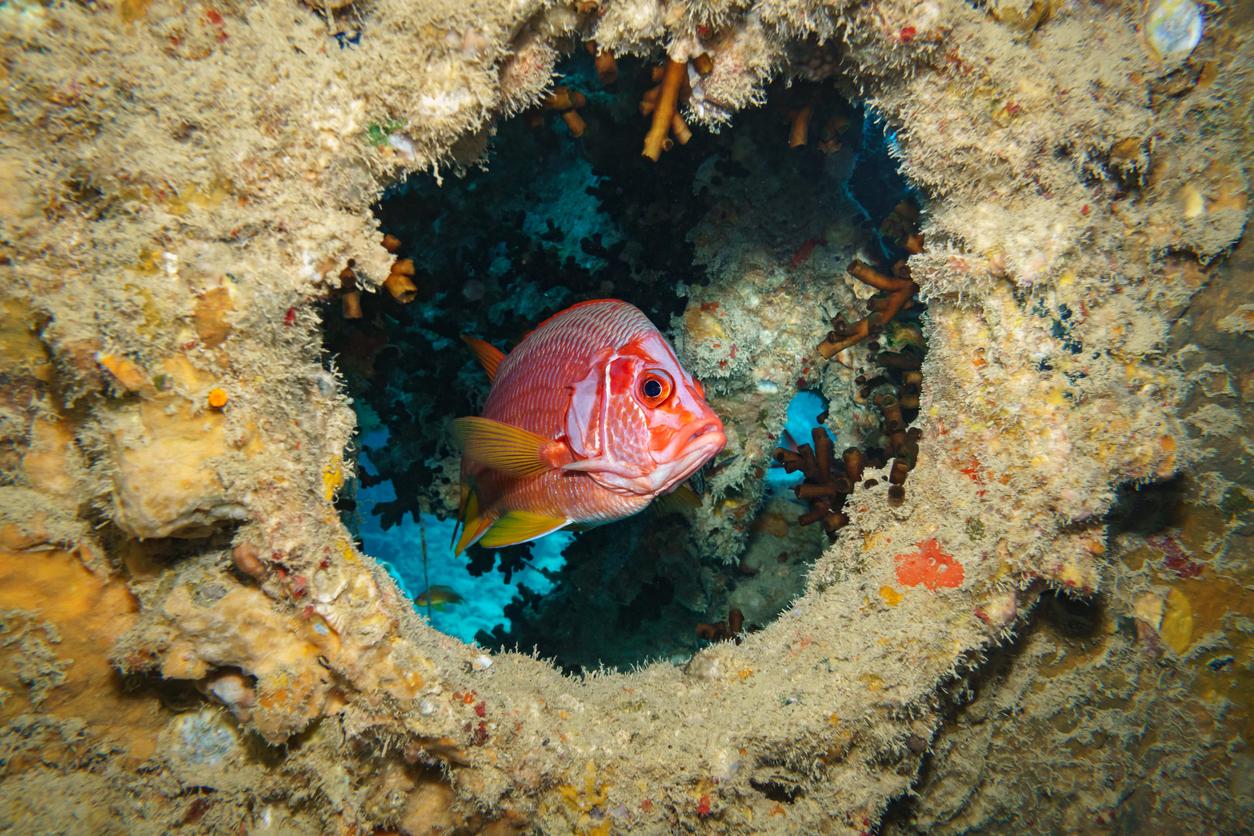 Duiken in Rode Zee