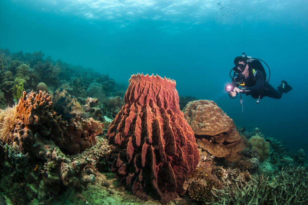 duiken op de filipijnen voor beginners en gevorderden