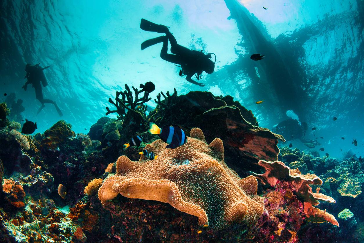 duiken op de filipijnen