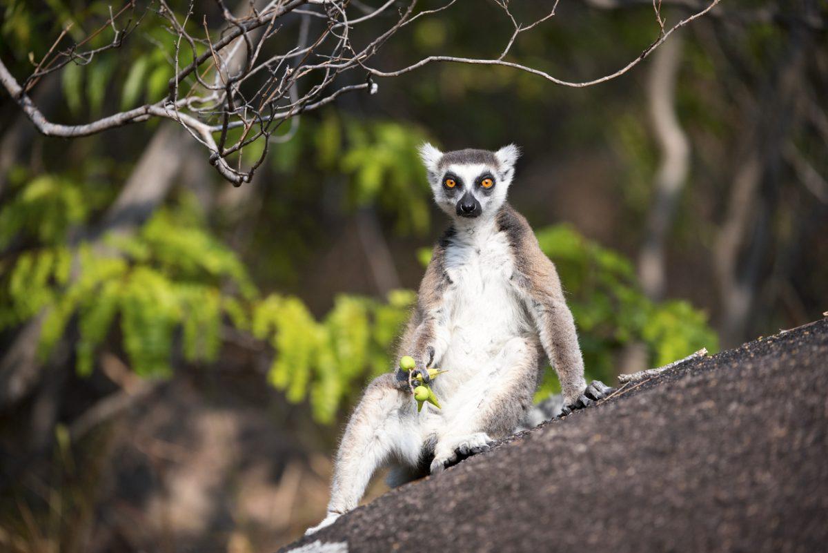 Madagaskar, een paradijs voor de Afrikaanse kust