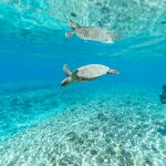 Snorkelen op reis. De beste snorkelspots en tips